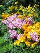 3091047-spring-flower-garden