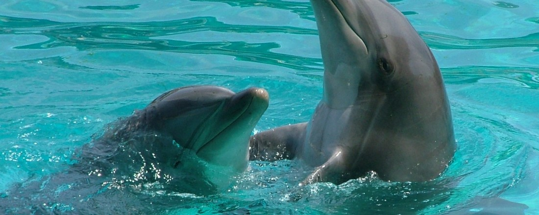 dolphins-1362278 kindness
