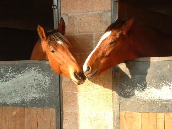 the-kiss-1312505 horses